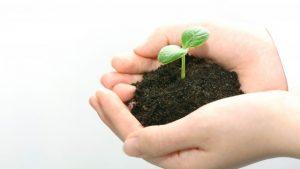 Bitbean(ビットビーン)のPoSで豆を育てる!同期短縮と効率良いステークに必要な保有数・コイン分割も!